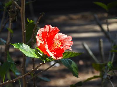 Plumeria Plantation Garden Center