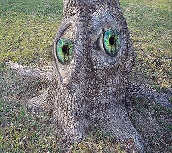 DIGITAL-CREATIVE-UNASSIGNED-GOLD-GREEN EYED TREE-BILL MCDONALD