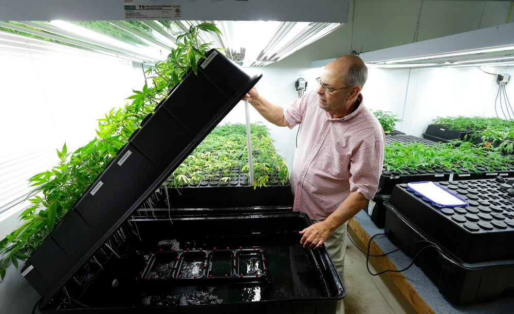 . In this June 25, 2014, photo, Bruce Cummins, the clone room manager at Sea of Green Farms, a recreational pot grower in Seattle, checks on his tiny plants, which are kept in a continuous water bath until their roots develop. They are also monitored for mites and other pests. (AP Photo/Ted S. Warren)