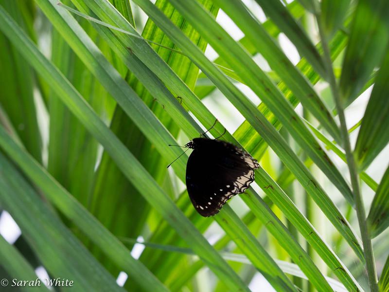 140503_ButterflyHouse_241.jpg