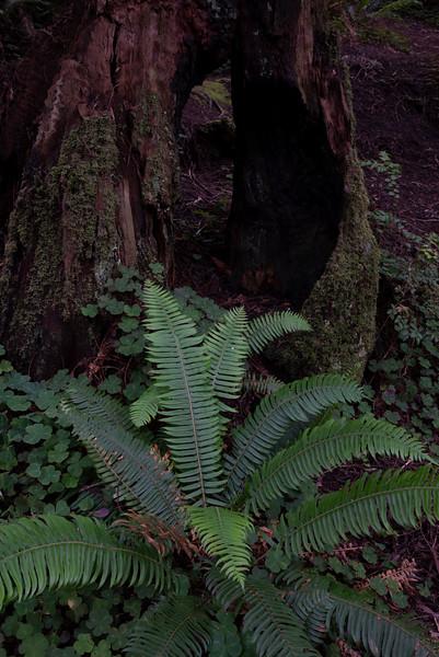 redwoodsFin29-1190.jpg