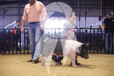 Pig Ringshots