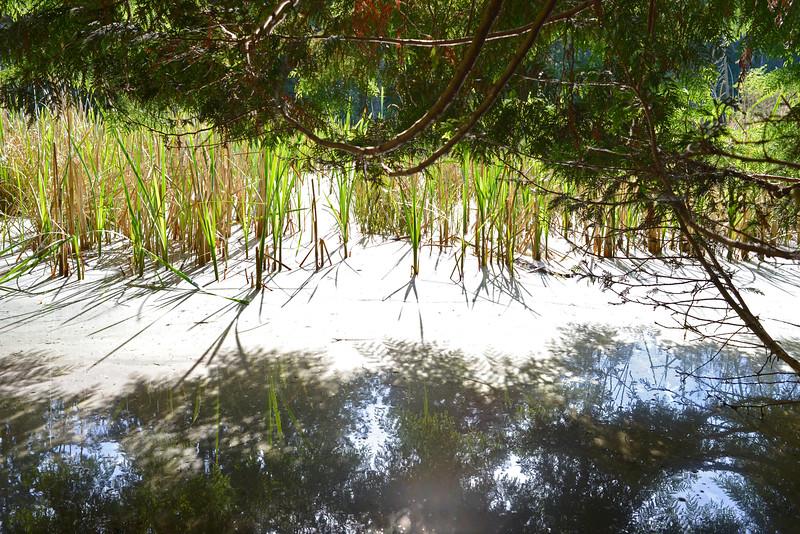 wetlands_20.JPG