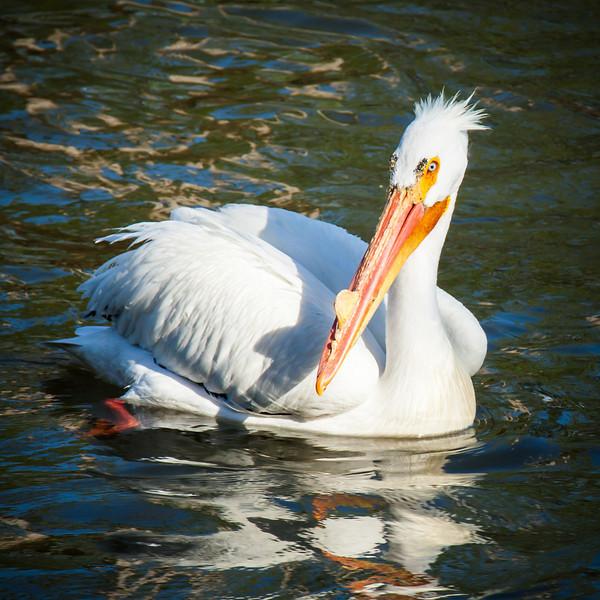 PelicanAfternoon-62-1827678201-O.jpg