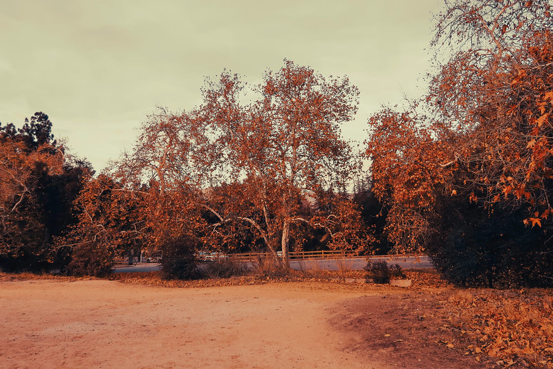 Griffith Park 102.jpg