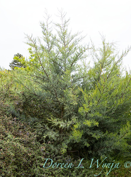 Argyle landscape_1220.jpg