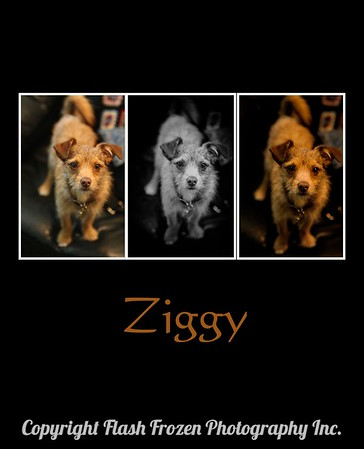 Ziggy The One and Only