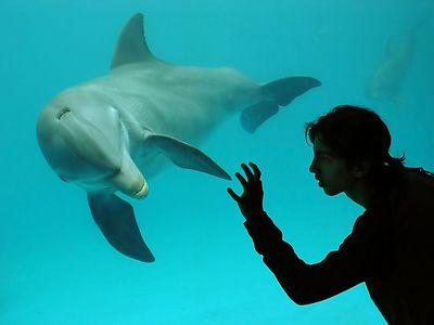 Havana  Aquarium