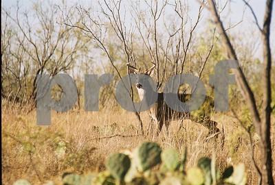 acorns-cause-deer-hunters-to-struggle-early-across-texas