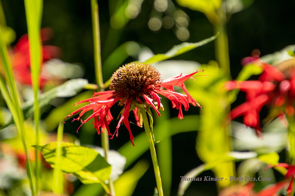 Pollinator Garden - The Beginning 2019