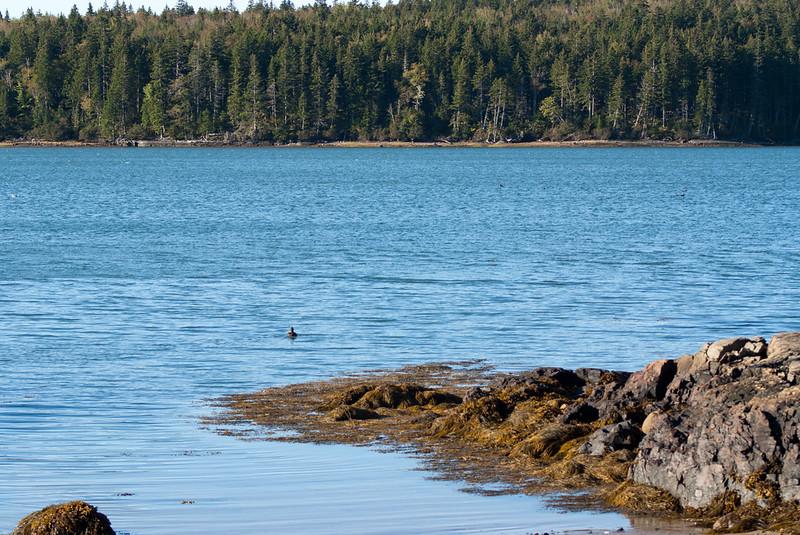Maine Vacation-02886.jpg