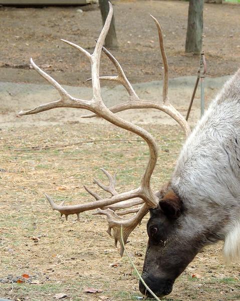 Columbus Zoo 008 N.jpg