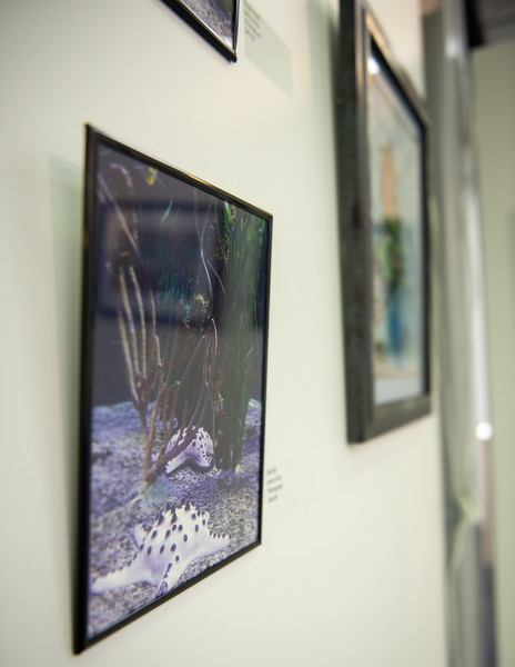 Check out the Islander Faculty and Staff Art Exhibition located on the first floor of the Mary and Jeff Bell Library.