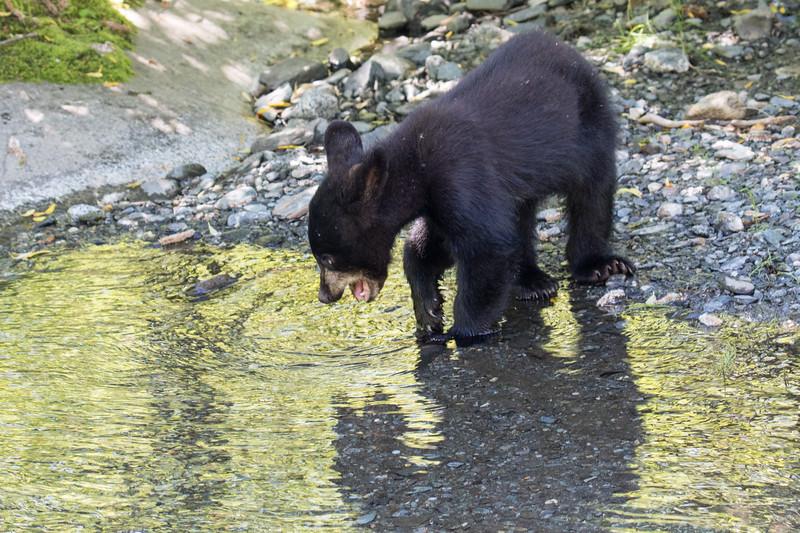 Juneau Alaska 2019-25.jpg