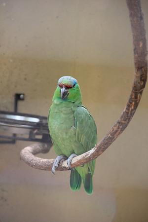 Iguacu Bird Park