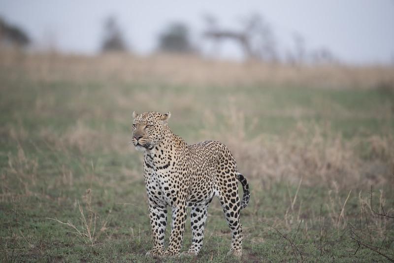 Africa - 101616 - 5615.jpg