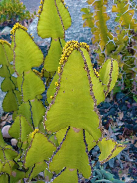 encenitas botanical05.jpg