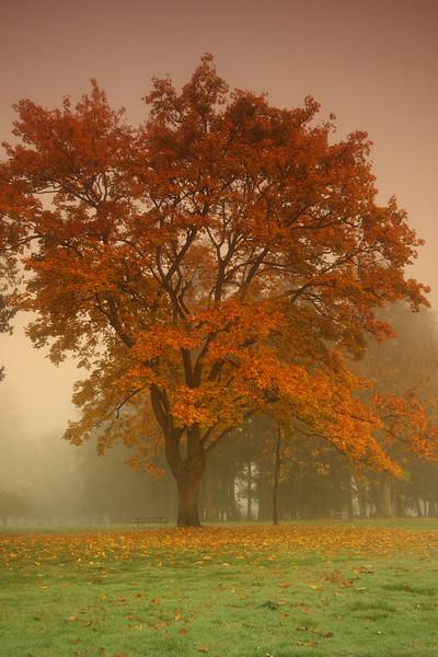 Fall 200703.JPG