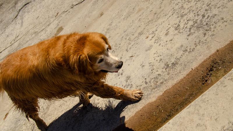 PuppyParty18-435.jpg