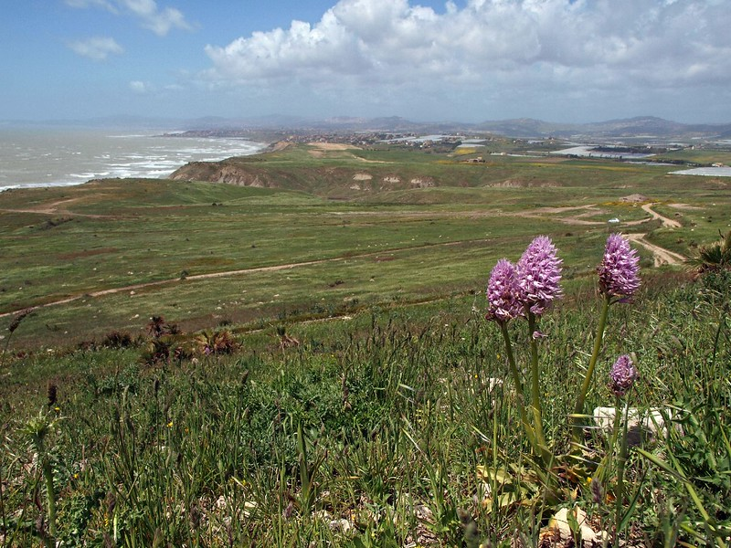 Punta Bianca Palma di M. 14-04-12 (37).jpg