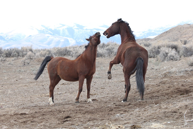 Jose and Hillbillie Willie playing in Owyhee, Idaho