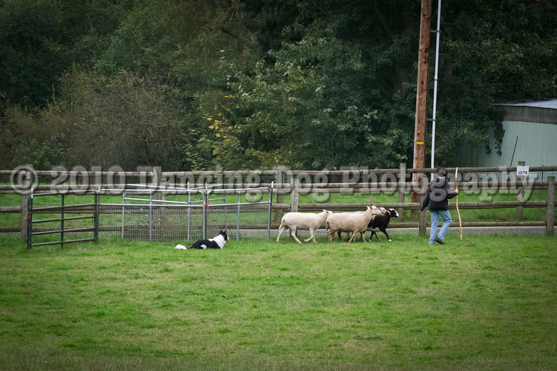 PacNW_HT_Sun_Sheep-6708