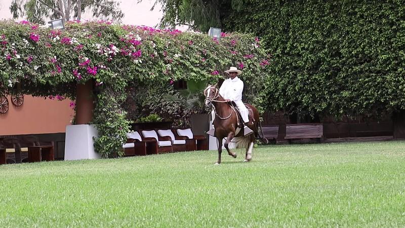 Paso Horse show