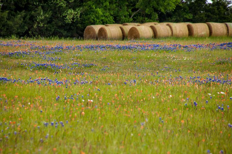 2016_4_9 Texas Wildflower Shoot-8595.jpg