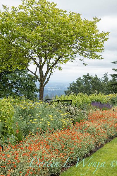 Helianthemum nummularium 'Henfield Brilliant' border planting_7714.jpg