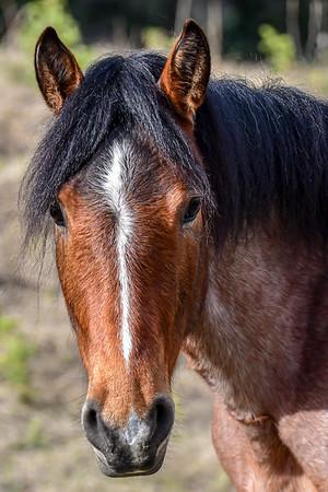 5-14-15-19 Ab. Wildies - Horse Film Trip 2