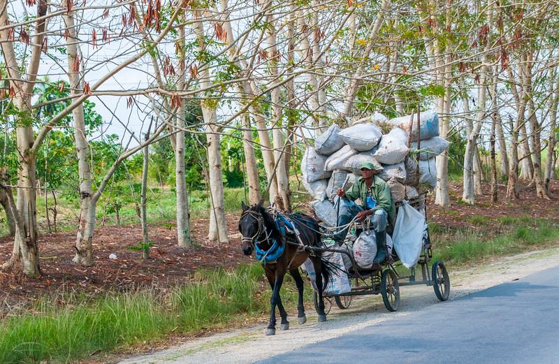 Cuba Carts-4.jpg