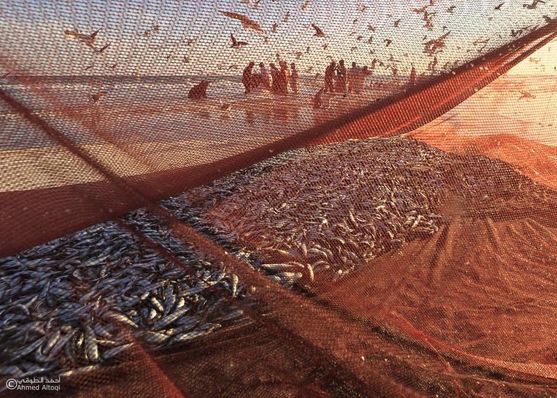 Sardine Season (44)- Dhofar.jpg