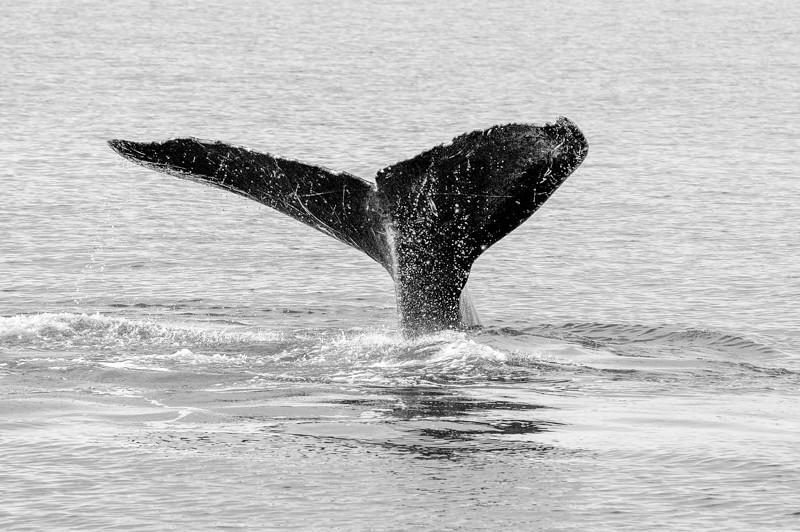 AK_Whales-4.jpg