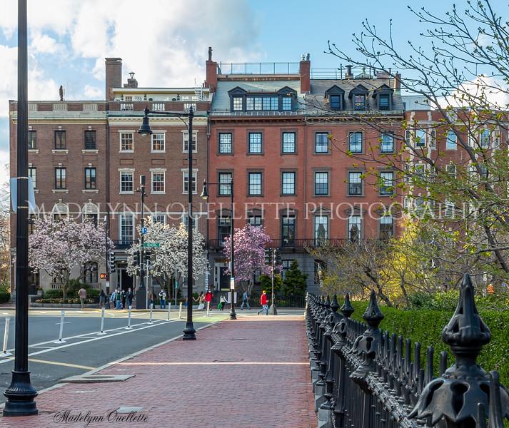 Beacon Street in Spring