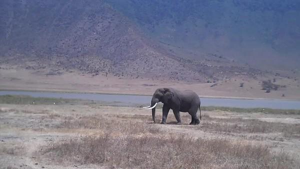 Tanzania Safari (VIDEOS)