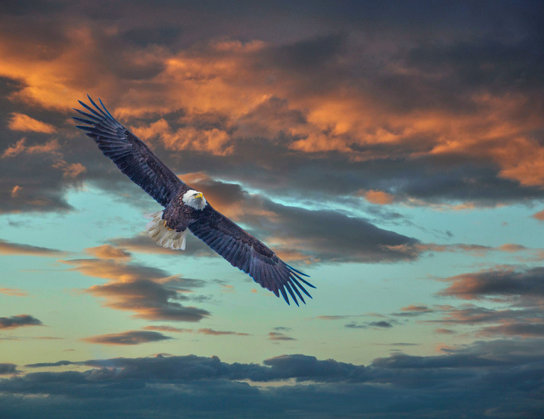 Wyoming Mn. sunset eagle
