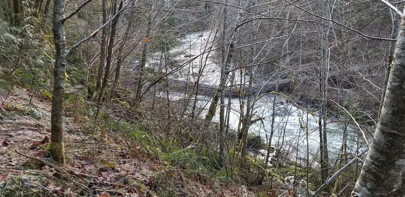 A HUGE log down along Fish Creek
