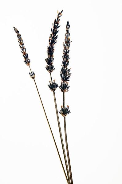 Flower_71I8563.jpg