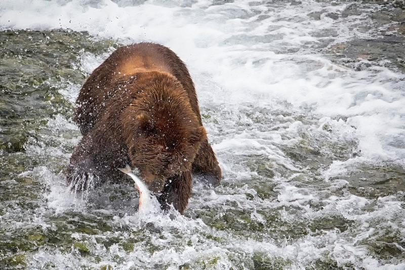 Alaska_2013_FH0T3443.jpg
