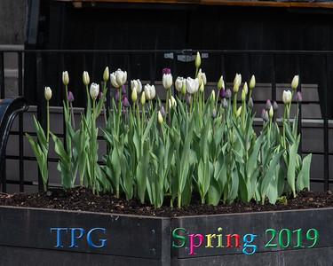 TPG Spring Reception 2019