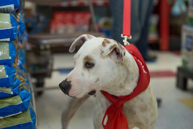 Dog Star Rescue Adoption Event February 2016