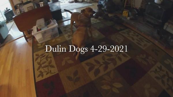 Dulin Dogs 4-29-2021