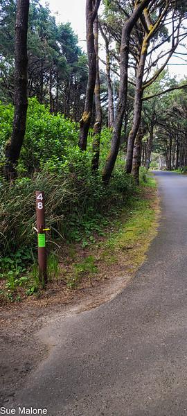 04-23-2021 Beachside State Park-3.jpg