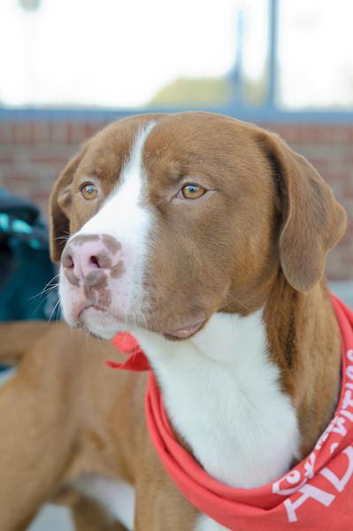 20110312 PetSmart Adoption Event-21.jpg