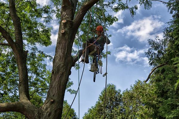 Tree Trimming 2012