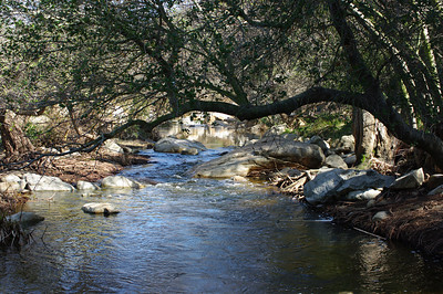 Elfin Forest - Feb 2010