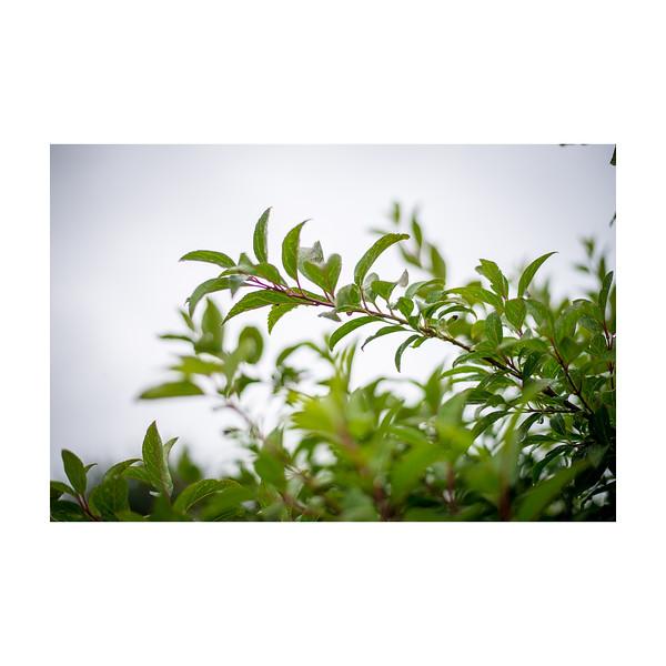 180_Plant_10x10.jpg