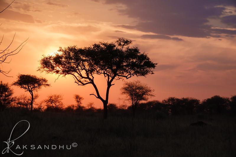 SunInAfrica-028.jpg