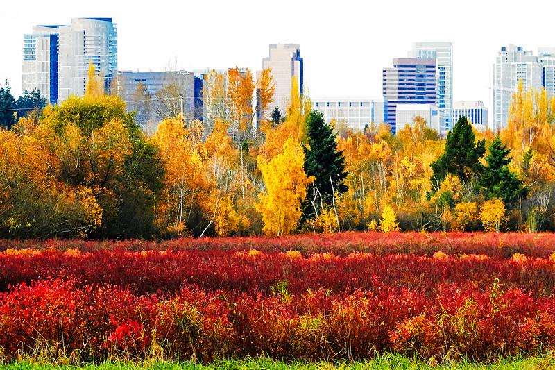 bellevue-park-bellevue-park-IMG_1398_.jpg