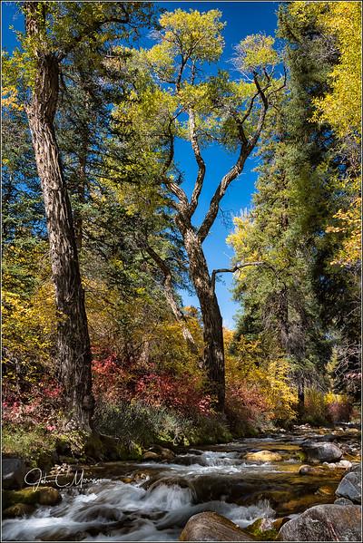 JM8_9105 Big tree Deep creek LPN.jpg